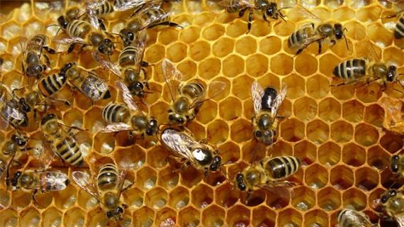 Resultado de imagen de el món de les abelles